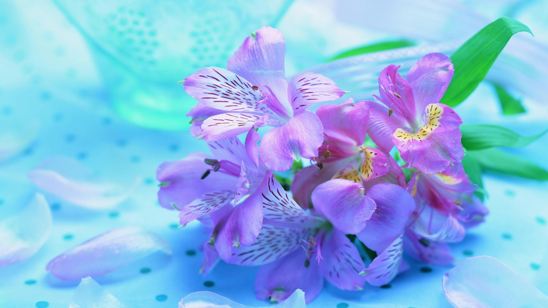 Die 56 Besten Flower Wallpapers