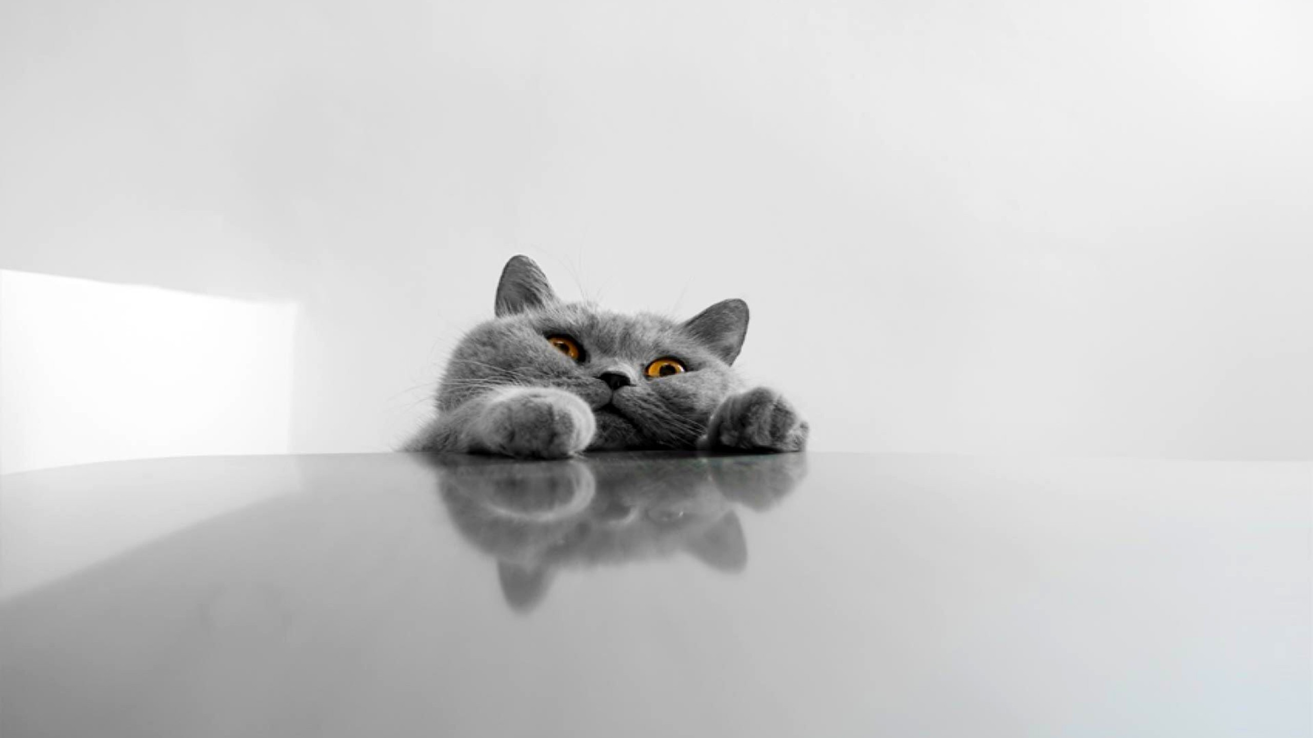 Die 57 Besten Cat Wallpapers