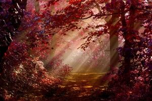 Herbst Wallpapers
